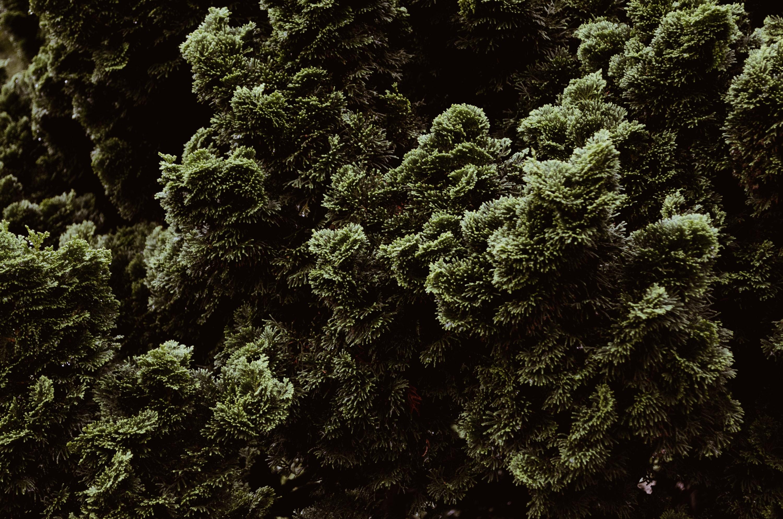 CS_trees